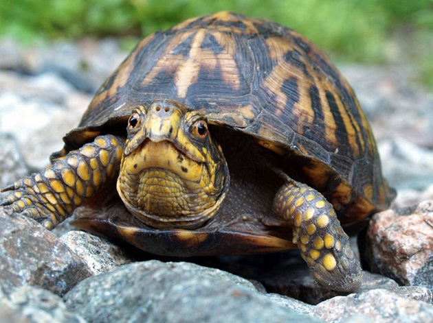 Điềm báo các giấc mơ thấy rùa