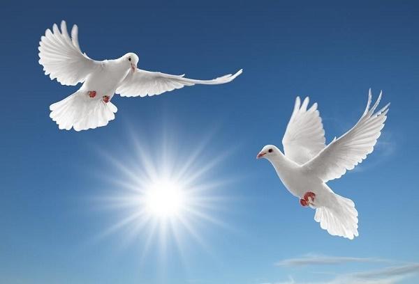 giải mã giấc mơ thấy chim
