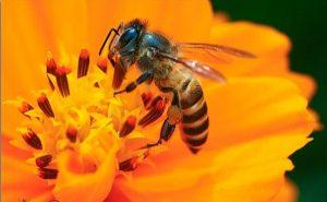 Nằm mơ thấy ong nên đánh con gì?