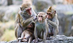 Ngủ mơ thấy khỉ có điềm báo gì?