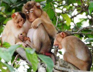 Nằm mơ thấy khỉ nên đánh con gì?