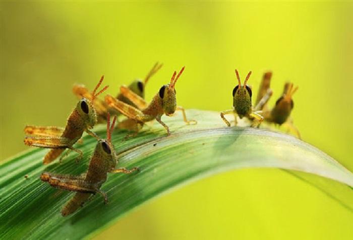 mơ thấy côn trùng
