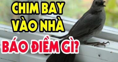 Chim bay vào nhà là điềm gì? Đánh con số mấy?