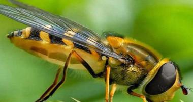Mơ thấy côn trùng đánh con gì? Là điềm gì?